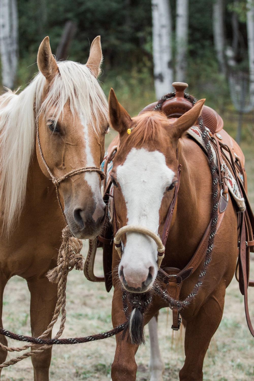 Horses Country Mountain Wedding
