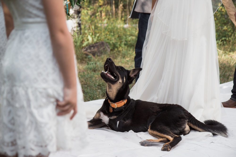 German Shepherd Puppy Mountain Wedding Ceremony