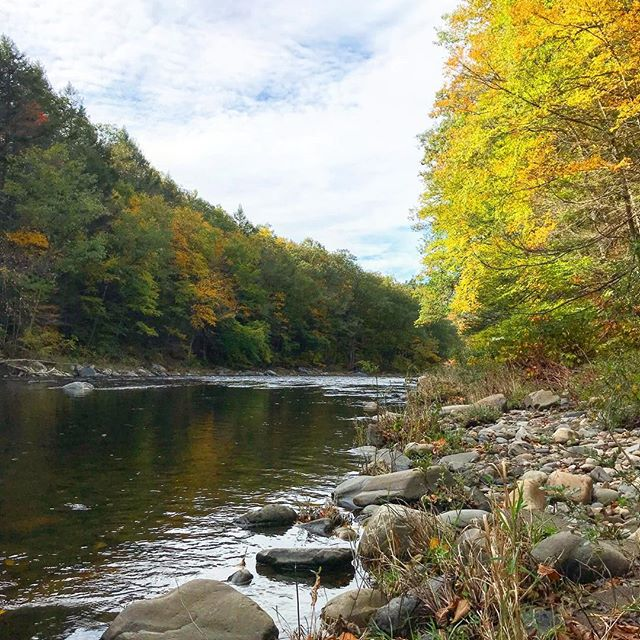 Massachusetts has some of the nation's most beautiful landscapes 🌳 . . . #massachusetts #forestconservstion #savemassforests #naturalmassachusetts #radicalconservation #restore #keepitintheground #treelovers #newengland