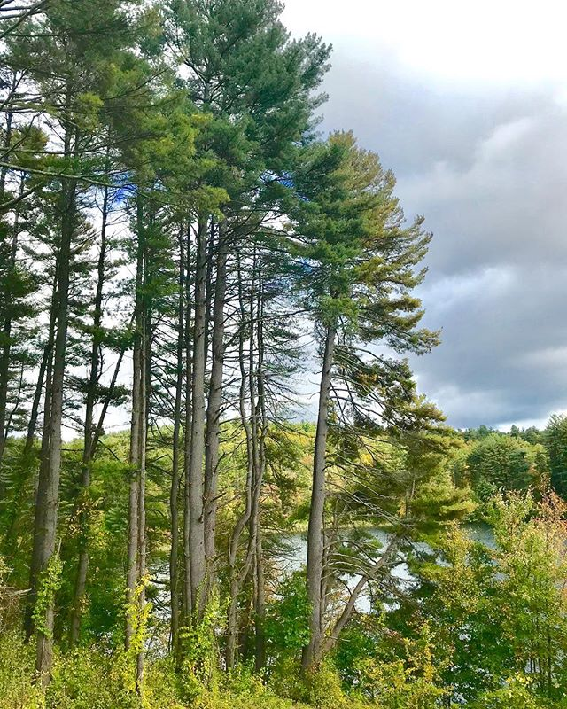 Did you vote for climate today? We sure did! ✊🏽🌲🌎 . . . #massachusetts #forestconservstion #savemassforests #naturalmassachusetts #radicalconservation #restore #keepitintheground #treelovers #newengland #climatevoter