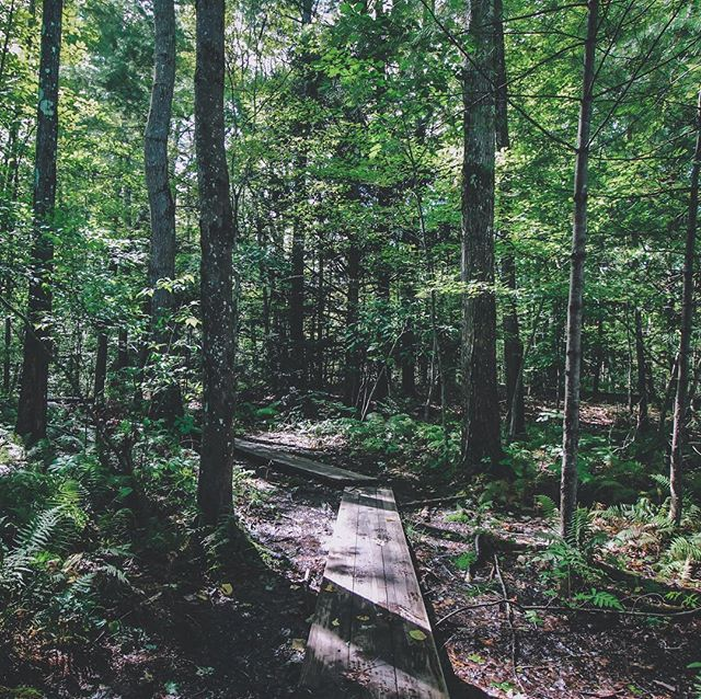 There's a difference between creating happy trails for hiking through a forest, and straight up cutting down trees under the guise of forest management. Just saying, stay connected as local stewards of this beautiful land 🙏🏽🌲 . . . #massachusetts #forestconservstion #savemassforests #climatechange #naturalmassachusetts #environmentalist #radicalconservation #restore #climatechange #keepitintheground #treelovers #northwoods #newengland #nologging