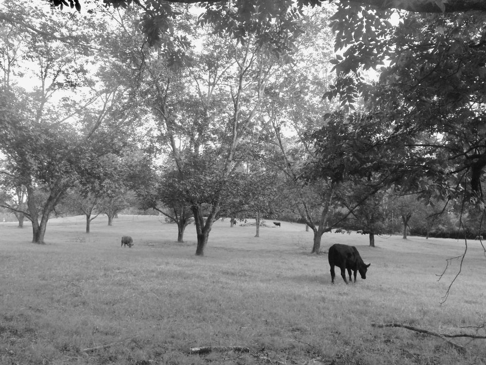Family pecan orchard