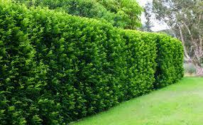 green wall_clean air_clare walter interview_sub-urban.jpg