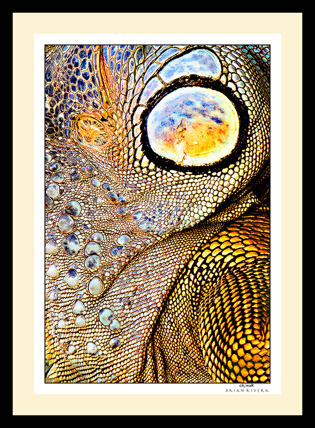 Web Winning Image Art Wolfe Contest ©BrianRiveraUncapher.jpg