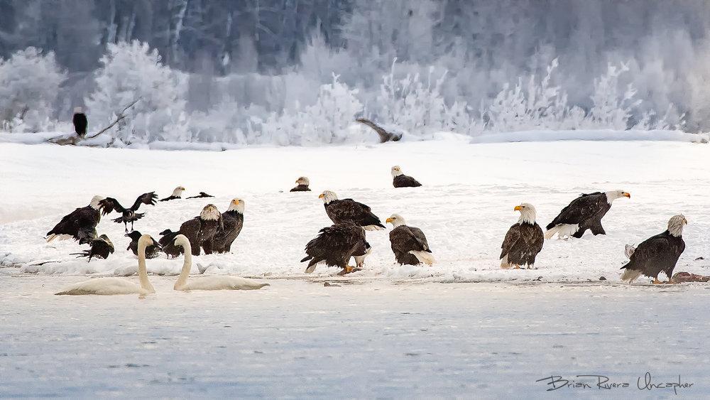 JPEG_WM_WinterCouncil©BrianRiveraUncapher.jpg