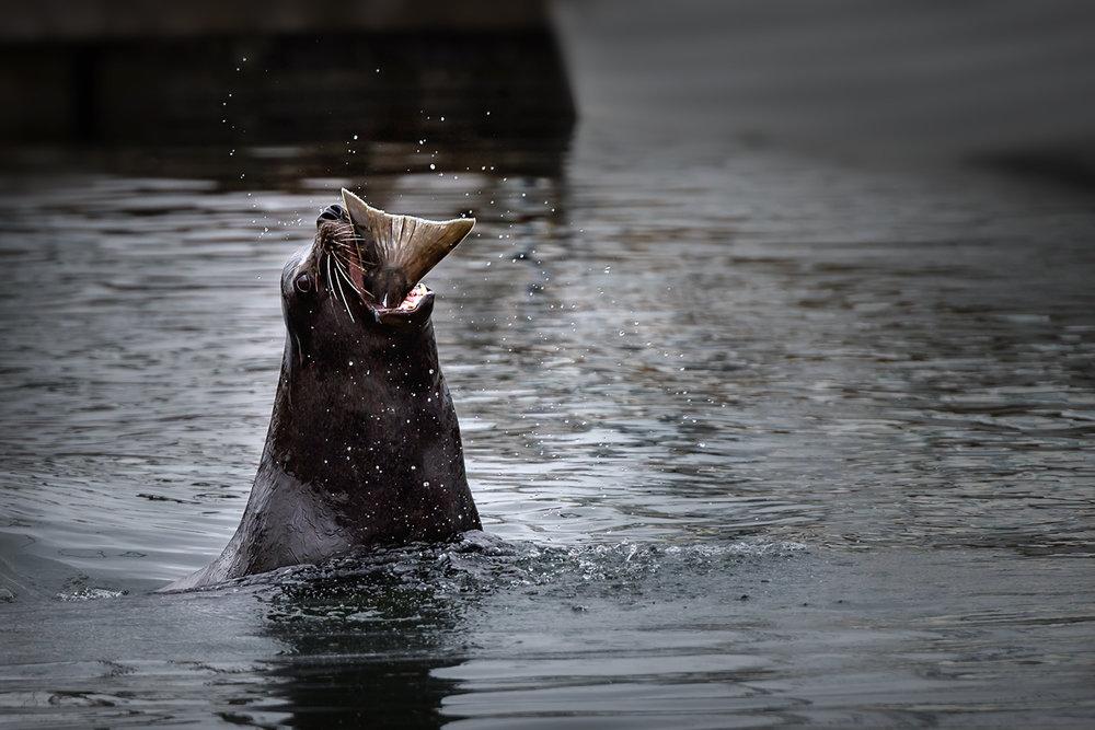 Sea Lion Nature's Best 2016.jpg