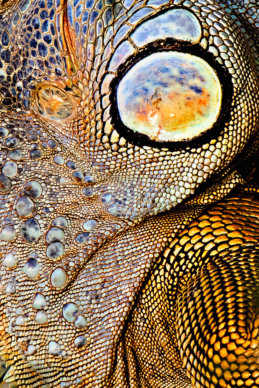 Iguana Skin Patterns ©Brian Rivera Uncapher.jpg