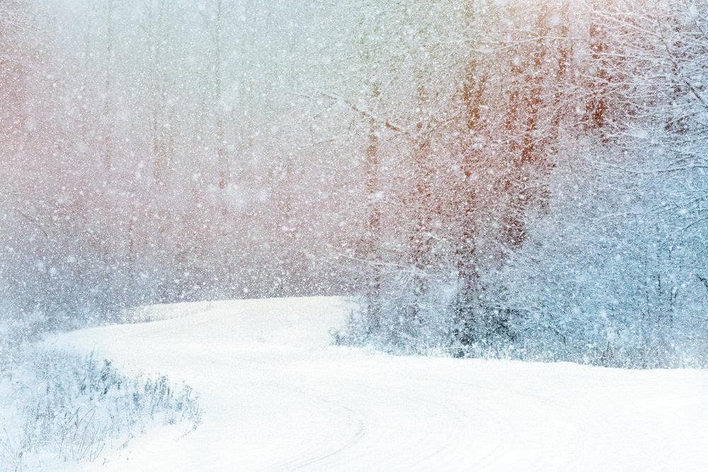 SnowyWoods©BrianRiveraUncapher.jpg