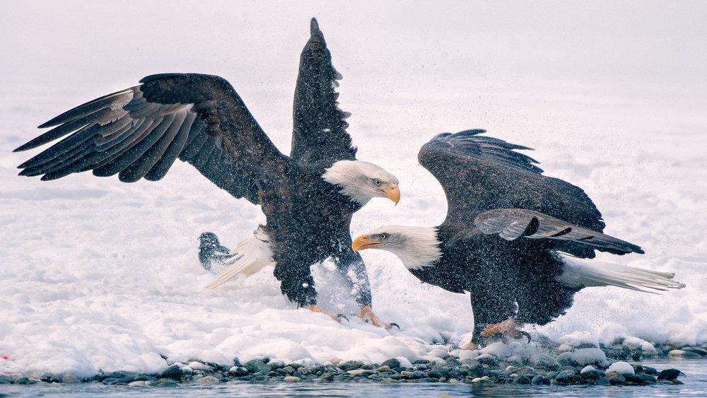M. EaglePortfolio_Image_15_©BrianRiveraUncapher.jpg