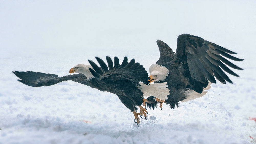 H. EaglePortfolio_Image_6B_©BrianRiveraUncapaher.jpg