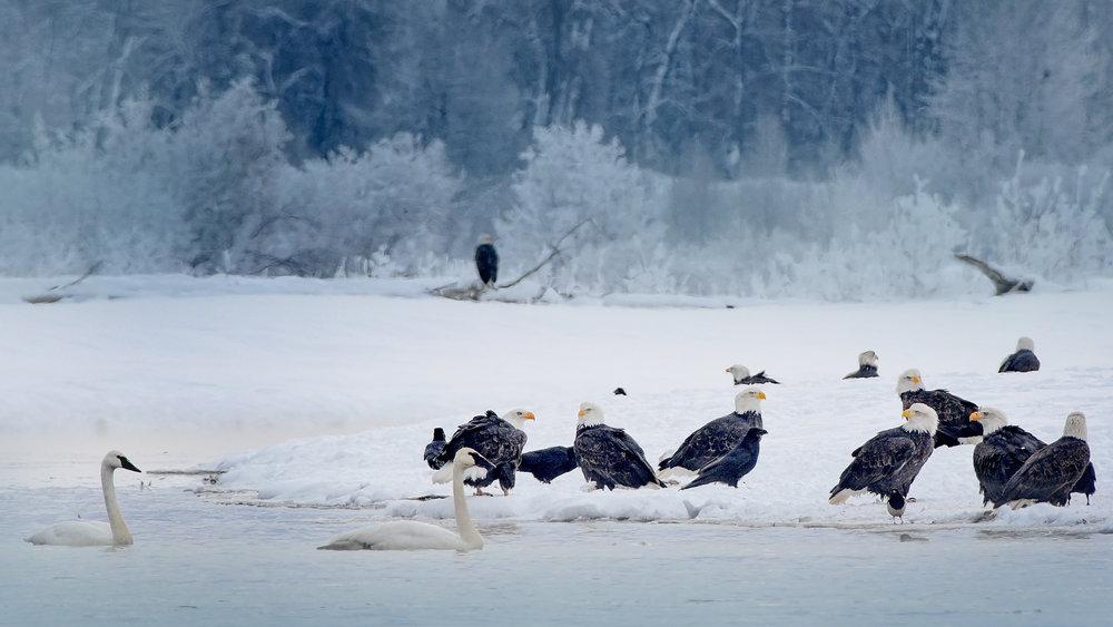 G. EaglesPortfolio_Image_16_©BrianRiveraUncapher.jpg