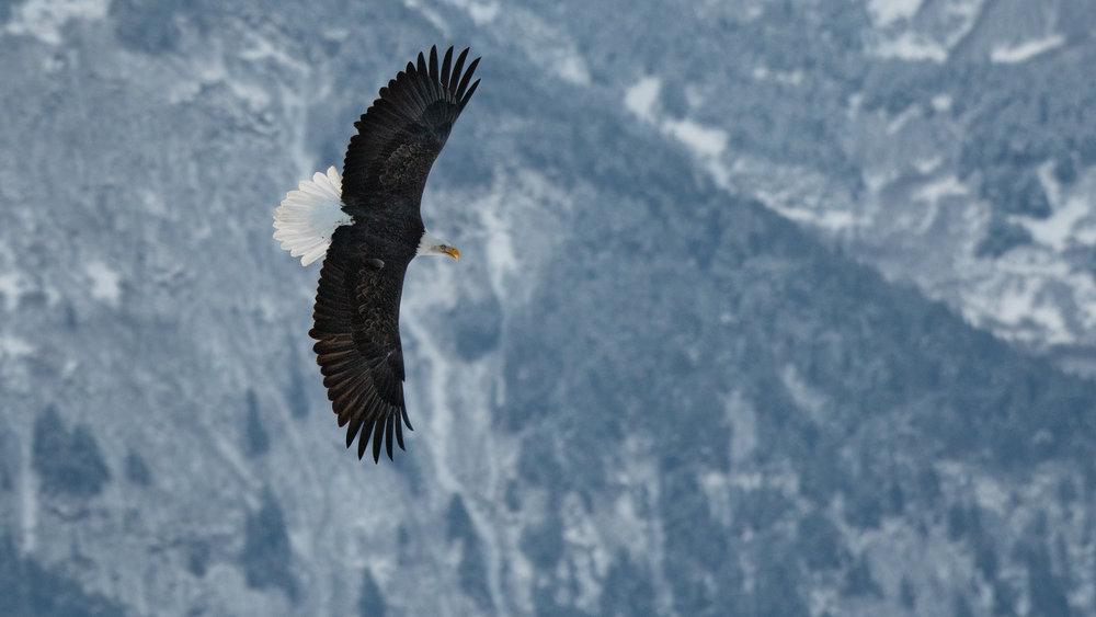 D. EaglePortfolio_Image_5_©BrianRiveraUncapher.jpg