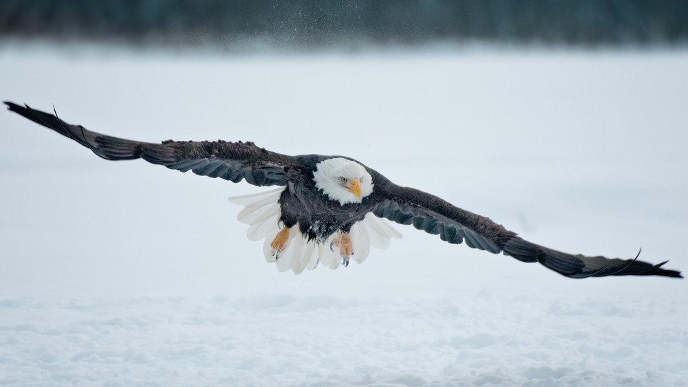 I. EaglePortfolio_Image_7_©BrianRiveraUncapher.jpg