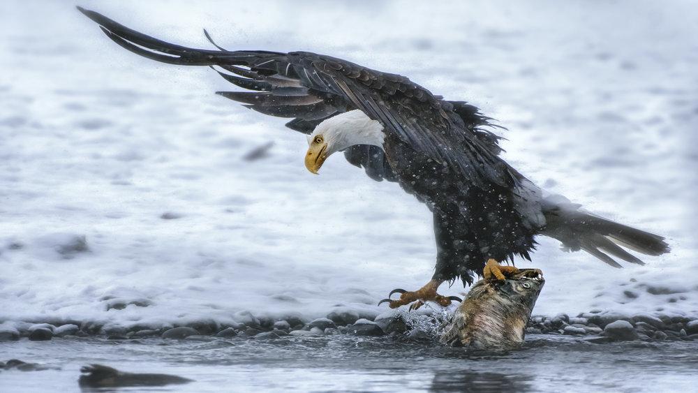 E. EaglePortfolio_Image_3_Ok_©BrianRiveraUncapher.jpg