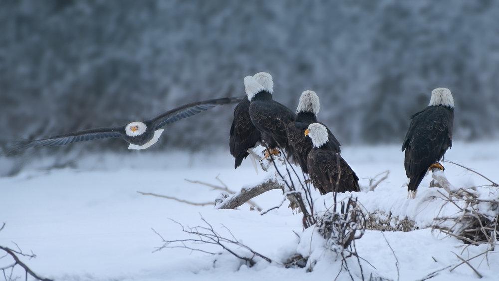 L. EaglePortfolio_Image_12_©BrianRiveraUncapher.jpg