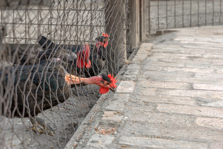 thanksgiving turkeys in prison