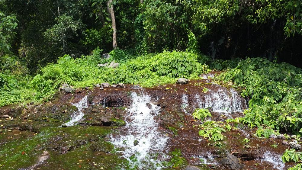 Asoka-Sekumpul-8.jpg