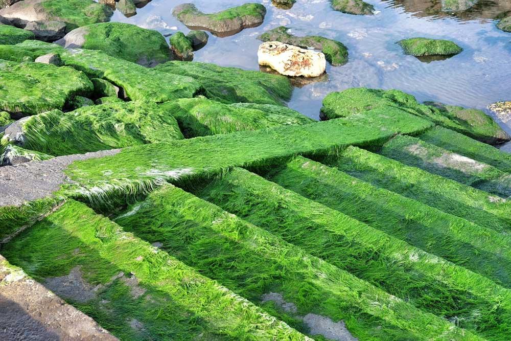 Asoka-Pantai-Masceti-9.jpg