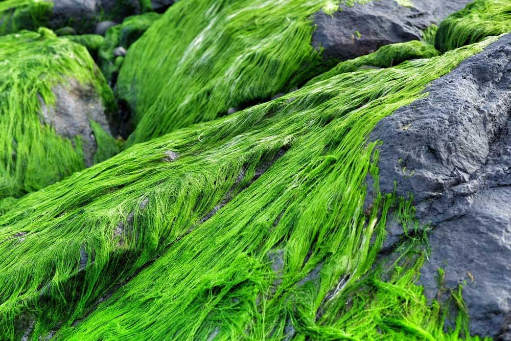 Asoka-Pantai-Masceti-.jpg