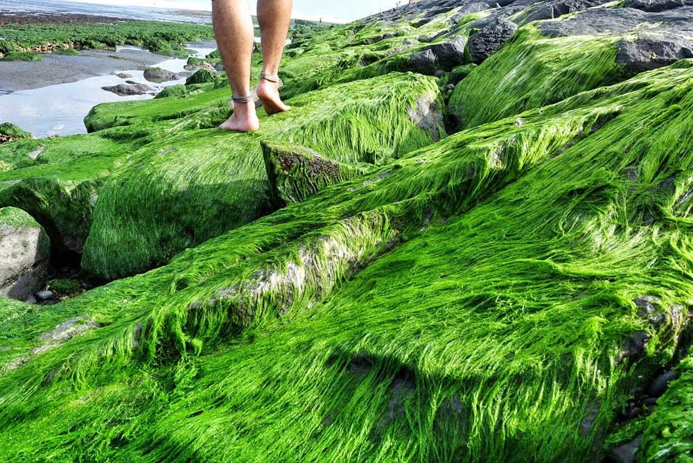 Asoka-Pantai-Masceti-5.jpg