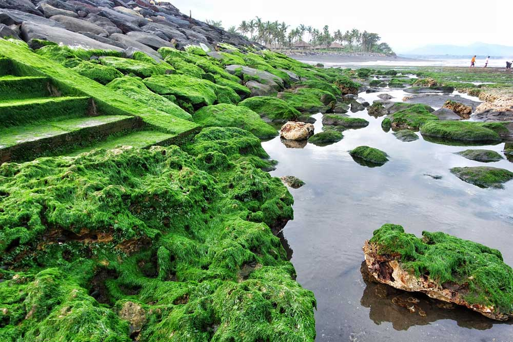 Asoka-Pantai-Masceti-16.jpg