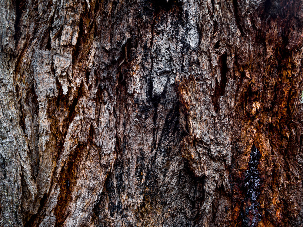 bark 03.jpg