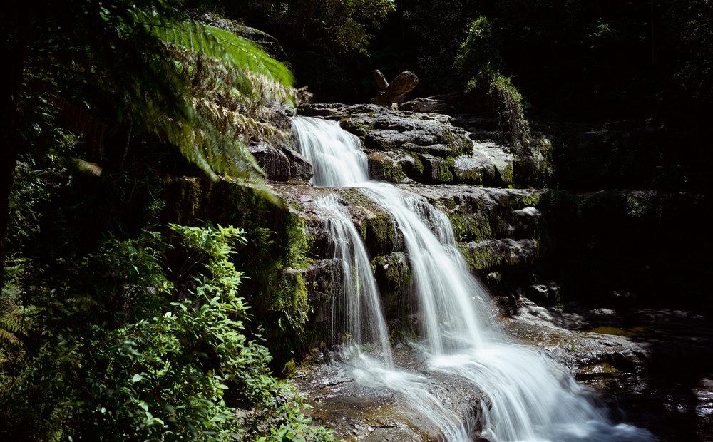 Leafy falls / Tasmania