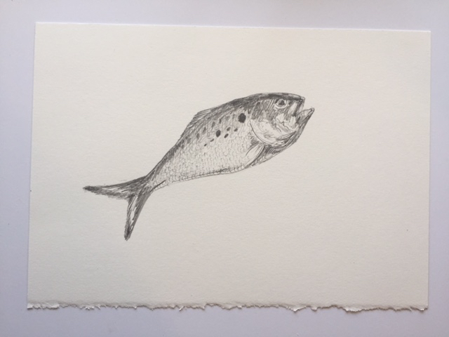 "Juvenile Menhaden (Peanut Bunker), pencil on paper, 7"" x 10"""