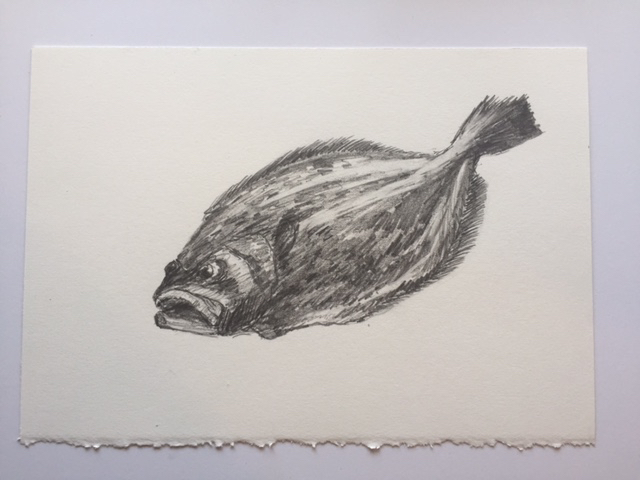 "Fluke, pencil on paper, 7"" x 10"""