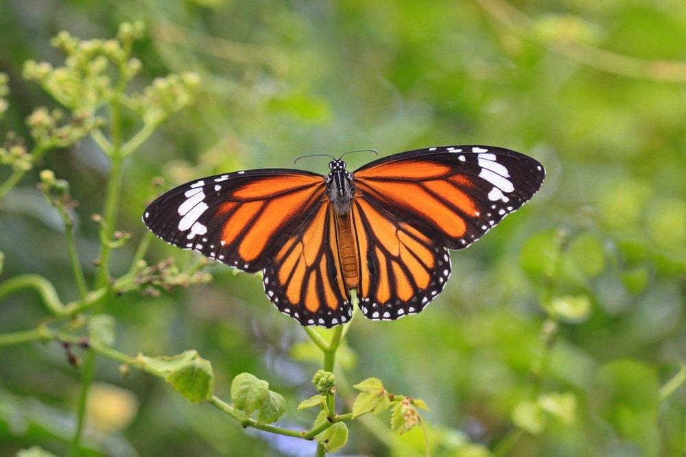 butterfly-3886065_1920.jpg