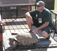 "Some tortoises grow very large. Your local herp society may be able to help you find a new home for these ""specialty"" pets."
