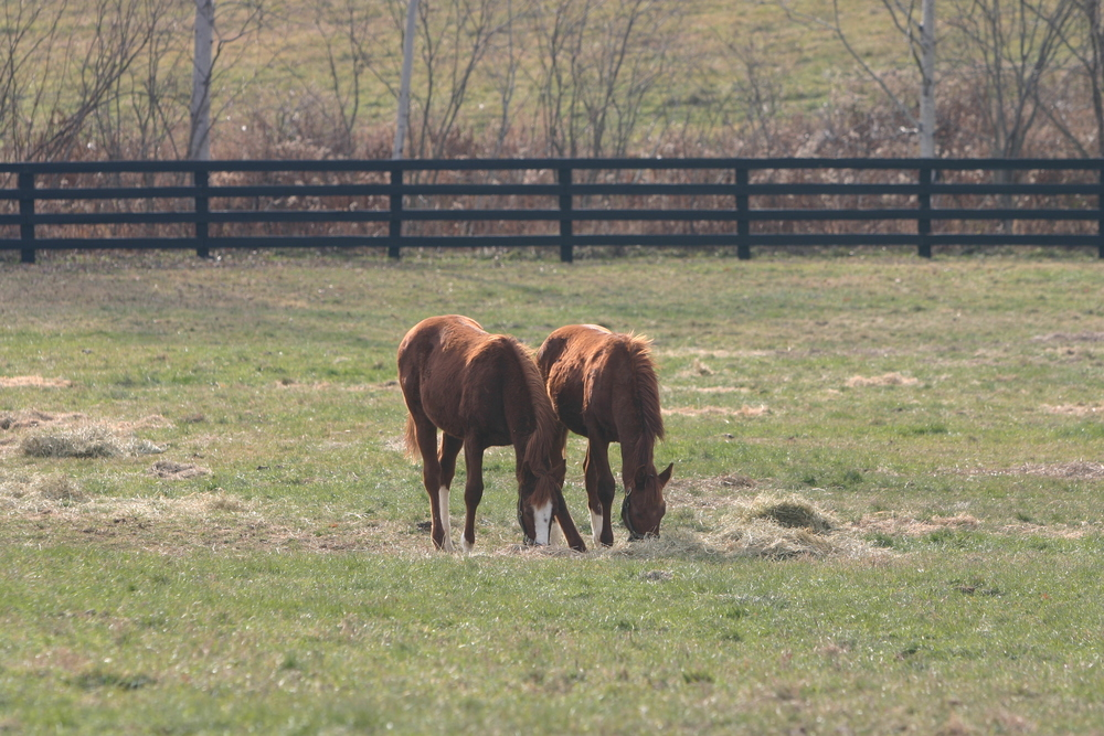 A boutique broodmare nursery