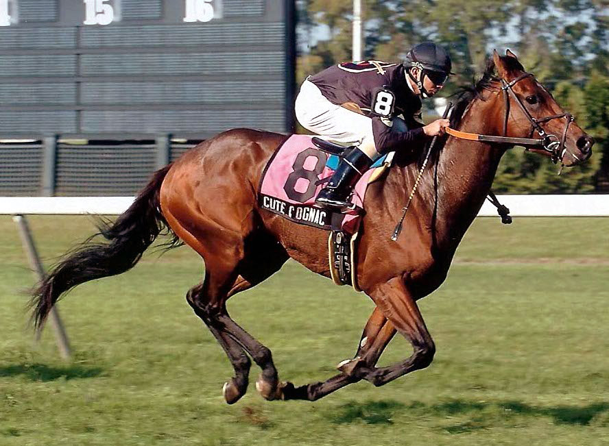 Cute Cognac winning the Office Miss Stakes at Belmont Park on October 20, 2007