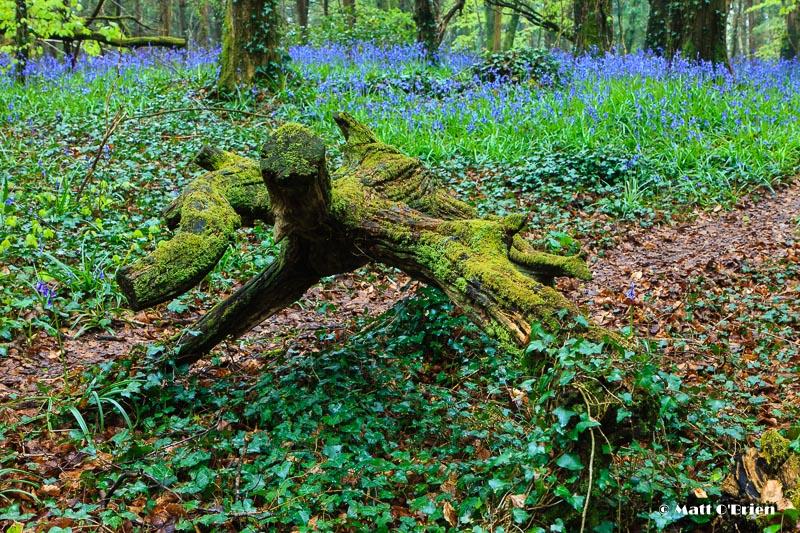 Killinthomas Woods