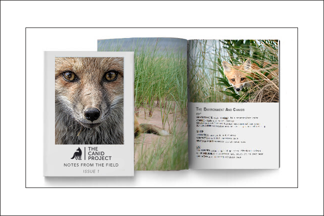 Call For Entries!  - The Canid Project is working on Issue 1 of its new periodical: Notes From The Field. We are looking for stories and photo essays that are focused on wild canids. They can cover wild canids' current issues, conservation, rehabilitation, medical care, research, or personal stories of the human-canid relationship.Those chosen to be in the first publication will be compensated by receiving a complimentary copy of the periodical and a choice of The Canid Project cap or T-shirt. Published pieces will appear in the periodical as well as in any online entities.For questions or to submit email thecanidproject@gmail.com