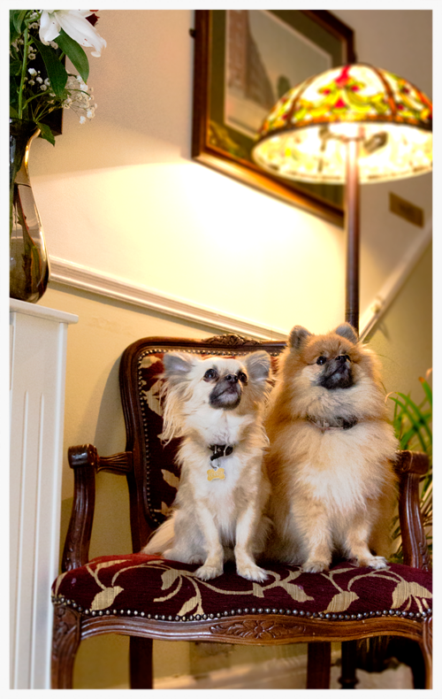 Peanut and Chilli, Avoca House Welcoming Committee!