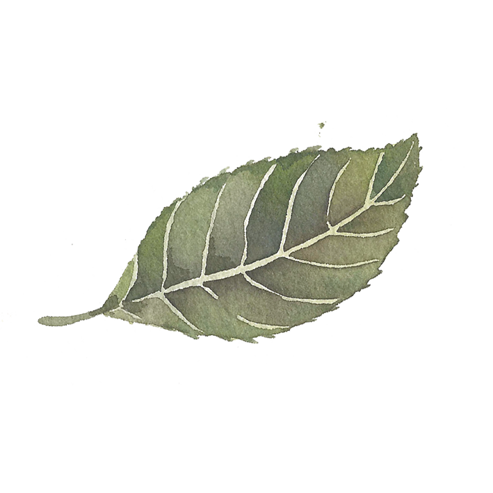 single leaf sticker.png
