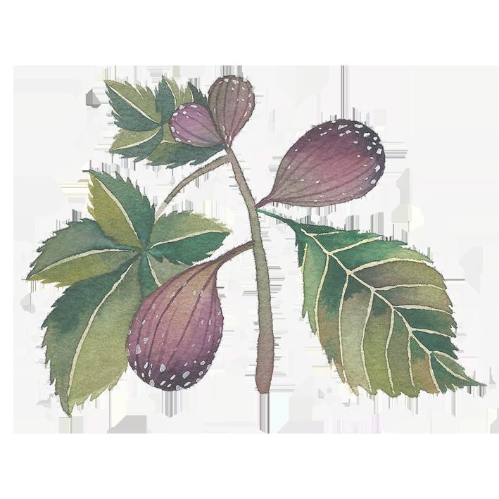 fig sticker.png