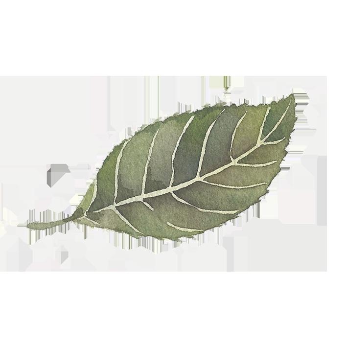 single leaf sticker.png