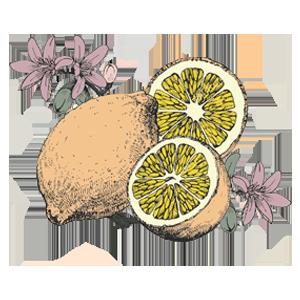 FAQ - most romantic italy - lemon - colour.png