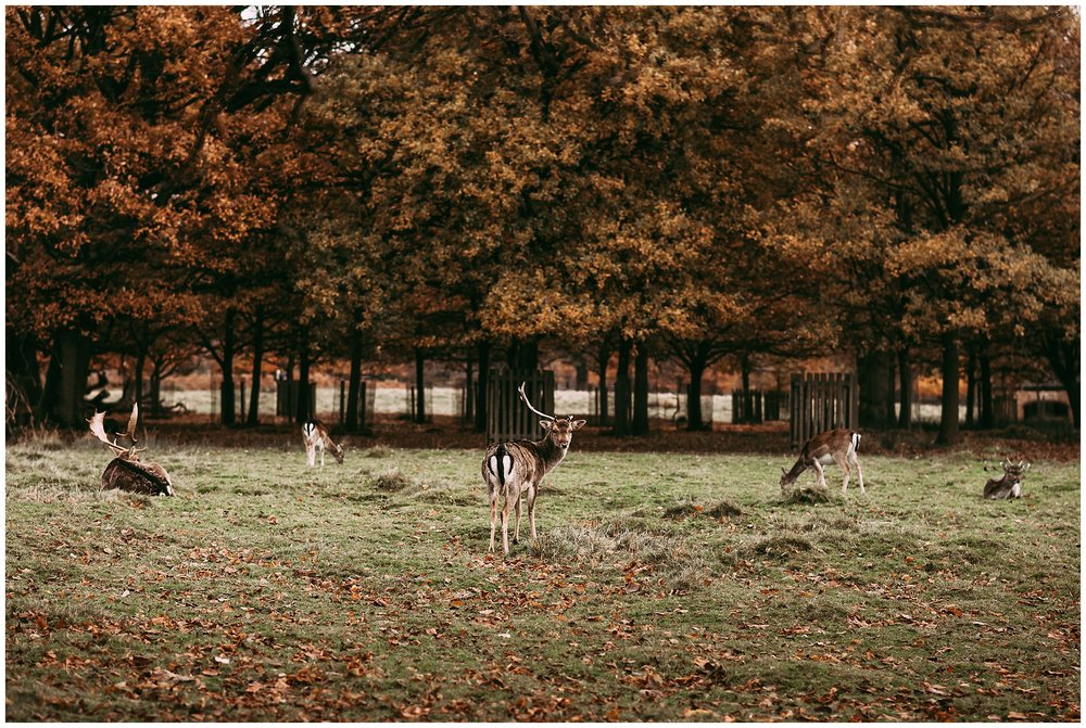 Deers in the Park at Dunham Massey