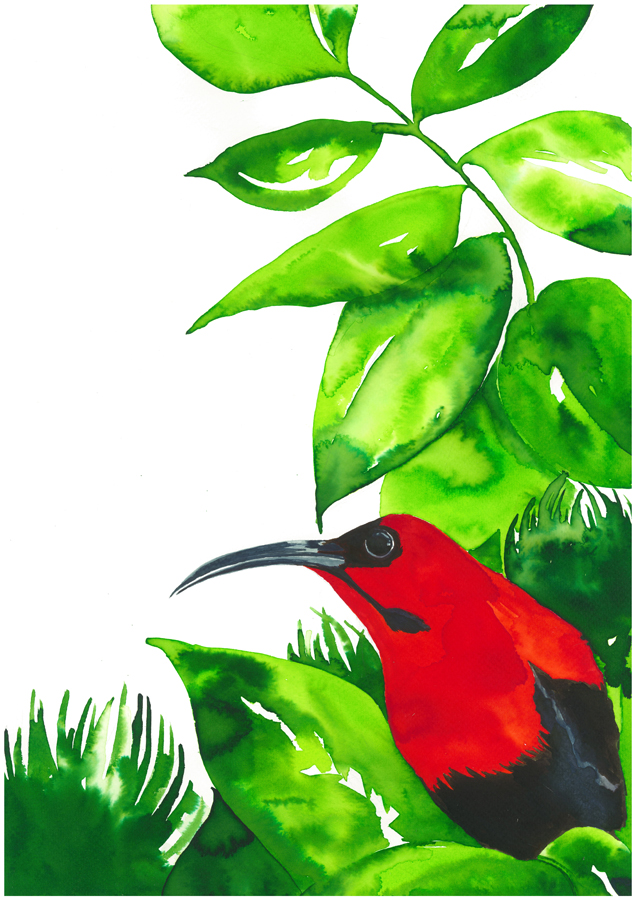 nadine-walker-illustration-bird-red.jpg