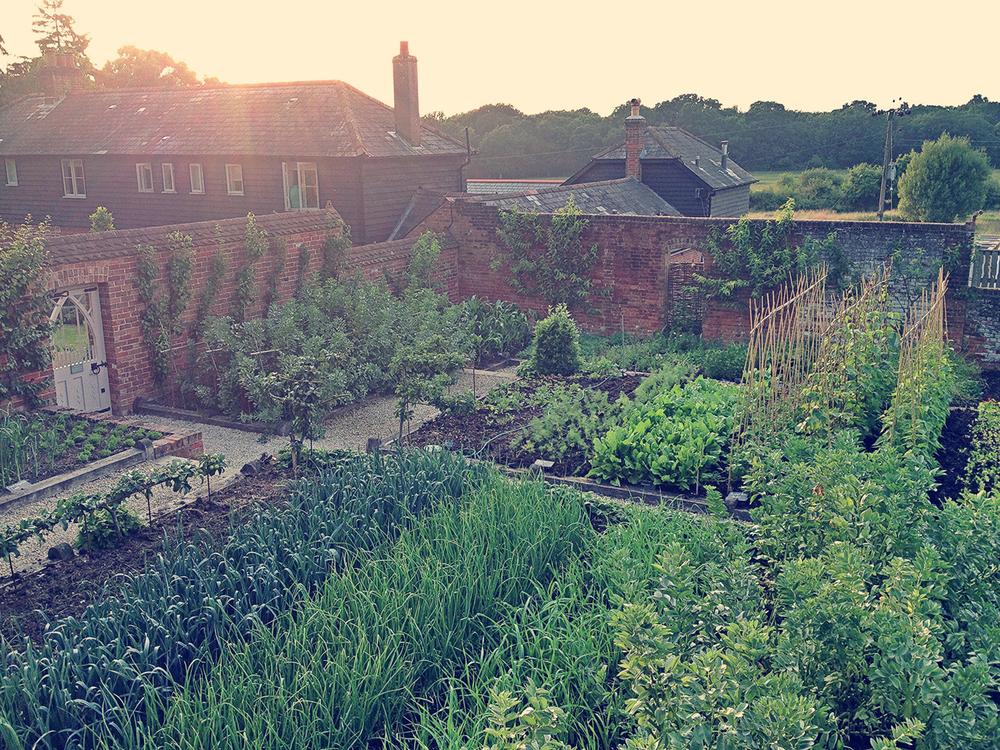 The Pig Kitchen Garden at Sunset.jpg