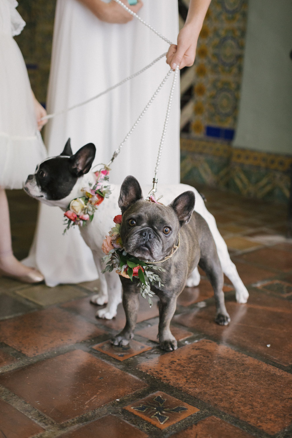 www.santabarbarawedding.com | Santa Barbara Courthouse | Canary Hotel | Aurelia D'Amore Photography | Dogs