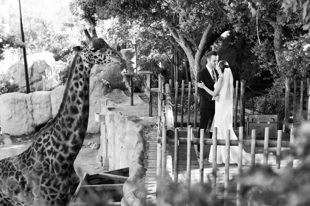 www.santabarbarawedding.com | Laura Ford Photos | Santa Barbara Zoo | Rincon Events | Bride and Groom and Giraffe