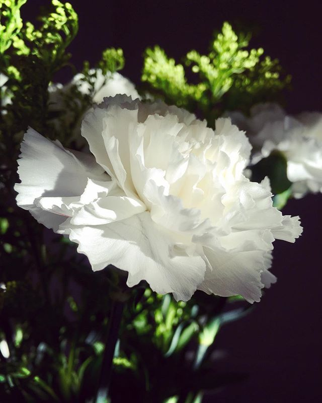 Thankful for carnations!