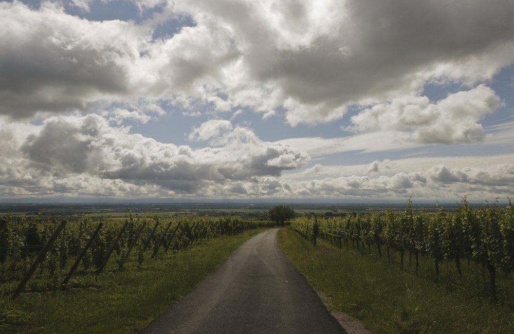 alsatian-countryside-1-1336806-1279x831.jpg