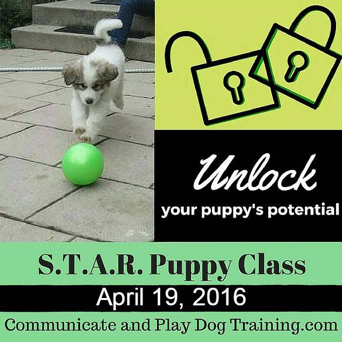 Puppy_Class_Hamburg_New_York April