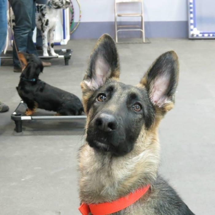 Next-step-dog-obedience-class.jpg