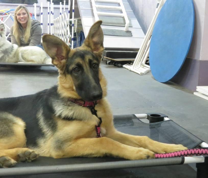 Dog_Training_Hamburg_New_York